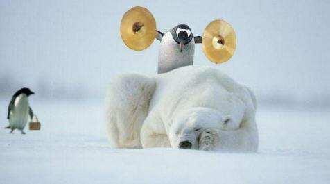 pinguin_streich
