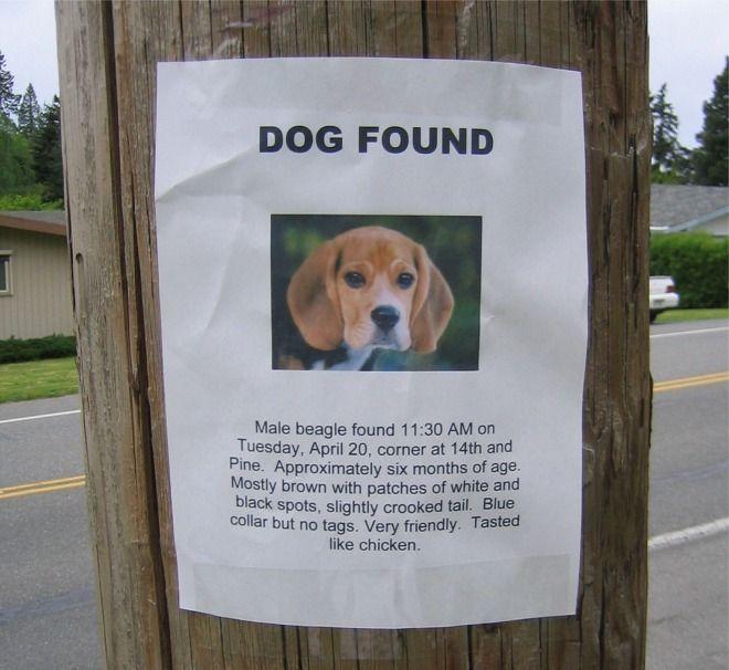 dogfound